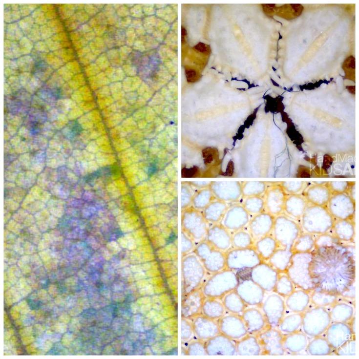 Digital Observation of Nature Patterns